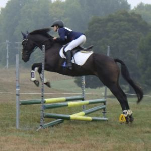 Horse for sale: Fun allrounder