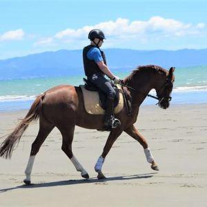 POCAHONTAS: Delightful mare