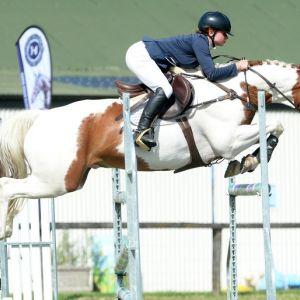 FUN, HONEST, MULTIDICIPLINED HORSE