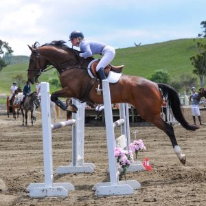 Horse for sale: Stunning Mare by Cassiano