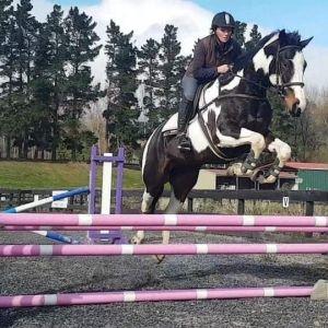 Horse for sale: Above average Allrounder