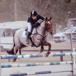 Adorable Welsh Cob All Rounder