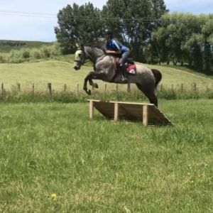 Pretty 6yr old mare bred to jump