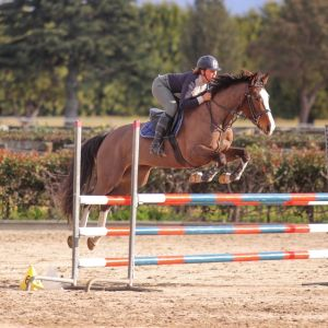 Horse for sale: Capable Young Cassiano Mare