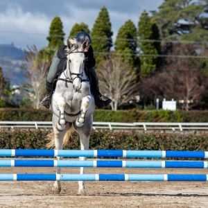 Horse for sale: Zirrocco Blue VDL Young Mare
