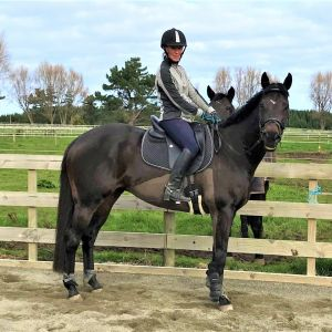 Show Hunter or Dressage potential