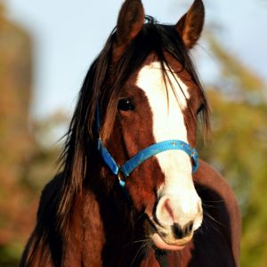 Horse for sale: BRIGHT, BLINGY AND BEAUTIFUL COLT