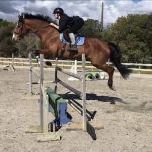 Serious Young Jumping Prospect