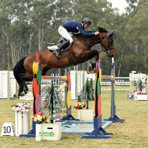 Horse for sale: World Cup Showjumping Gelding