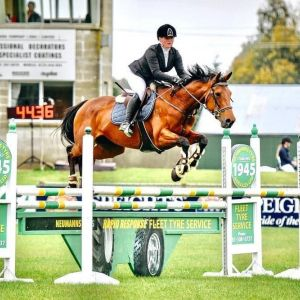 Horse for sale: Promising Young Sport Horse