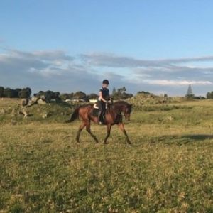 Horse for sale: Sweet natured TB mare