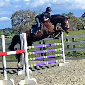 Horse for sale: LT Holst Francis