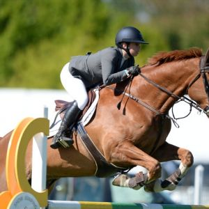 Horse for sale: Ultimate Junior/Young rider horse