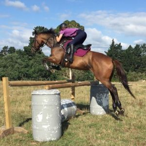 Horse for sale: HORSE FOR SALE - Talented and Trainable Gelding