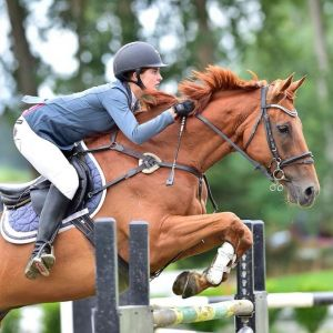 Horse for sale: Waldorf