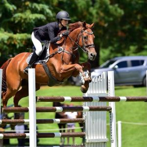 Horse for sale: HORSE FOR SALE: Amateur/Young Rider SJ for Sale
