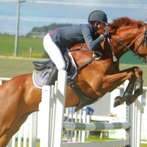 HORSE FOR SALE: Amateur/Young Rider SJ for Sale