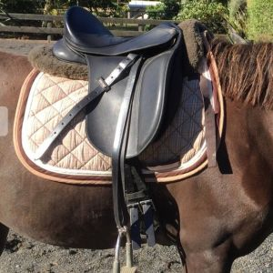 "Wintec 15"" Flock Dressage Saddle"