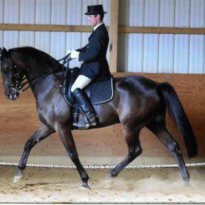 The Underestimated Standardbred