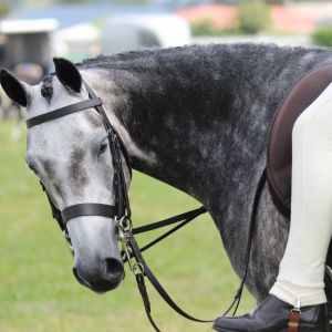 Horse for sale: PONY FOR SALE: Genuine Ultimate Super Star Pony