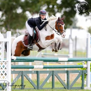 PONY FOR SALE: Superstar Jumping Pony