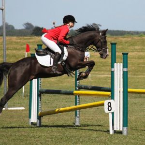 PONY FOR SALE: Super Multi Disciplined Schoolmaster