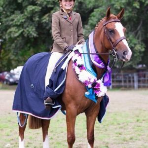 PONY FOR SALE: Beautiful Saddle Hunter Show Pony