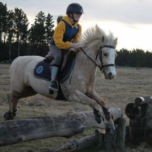 PONY FOR SALE: Competitive All Round Rockstar Pony