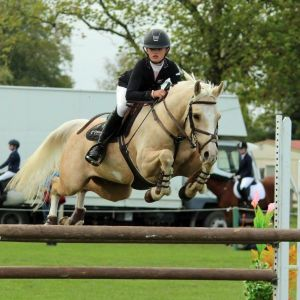 Exceptional All Round Pony