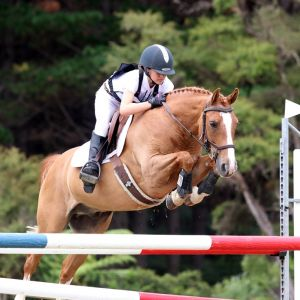 Horse for sale: PONY FOR SALE: SUPER TALENTED MULTI-DISCIPLINED PONY