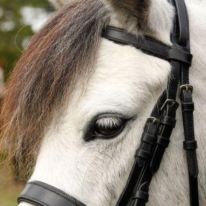 Talented and Sweet Natured Pony