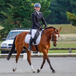 Exceptional Dressage/Eventer/Games Pony