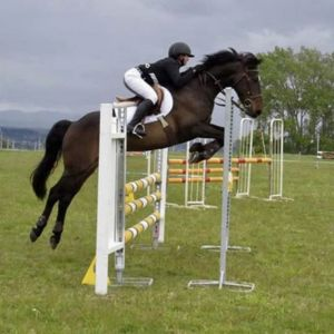 Horse for sale: One in a Million
