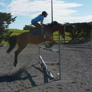 Horse for sale: Repicharge Double J Pony
