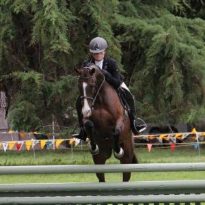 All Rounder/ Show Hunter