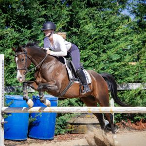 Horse for sale: All Rounder/ Show Hunter