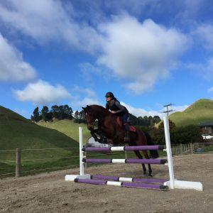 Multi discipline full size pony