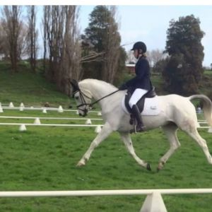Full Size Multi talented pony