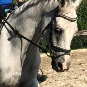 Full Size Multi talented pony