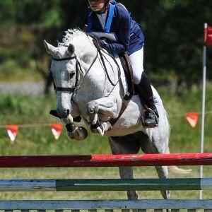 Horse for sale: Super Eventing pony/ SJ/ Allrounder