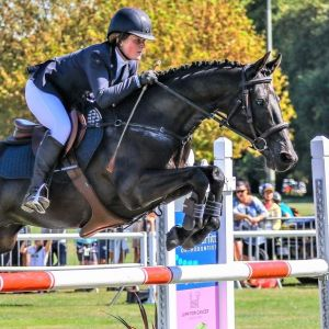 Night Beetle - Eventer/SJ full size pony