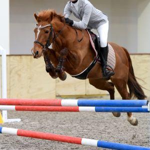 Horse for sale: Wonderful Pony Schoolmistress