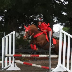 Horse for sale: Bold Chestnut Mare