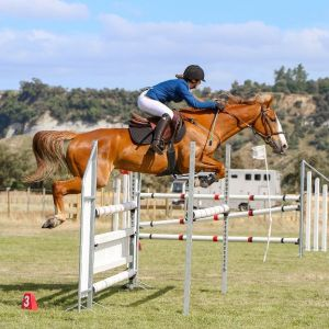 10 Year Old Competitive Pony