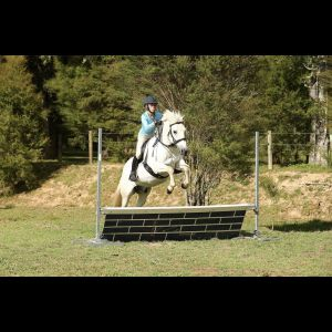 Horse for sale: Awesome Child's Pony