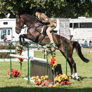 Horse for sale: The Ultimate Second Pony