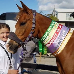 Super sweet experienced all rounder - second pony