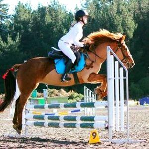 special allrounder pony