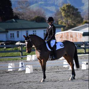 Beautiful Dressage Pony For Sale