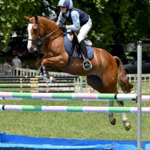 Horse for sale: Exceptional Multi-Purpose Full Size Pony